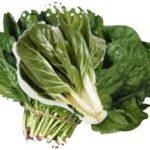 bietole spinaci